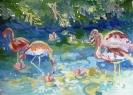 Радужные фламинго