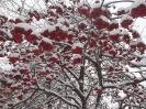 Деревья в нашем саду