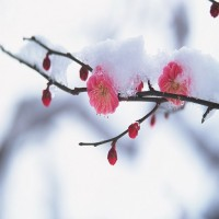 spring with a dust of snow 2048x1152 wallpaper
