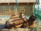 Весёлый зоопарк