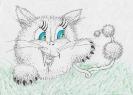Котик новой породы