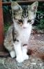 Котенок по имени Чимба